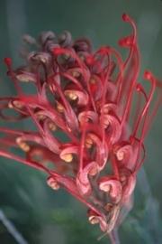 botanicals01