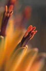 botanicals05