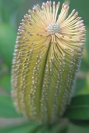 botanicals08