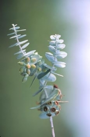 botanicals12