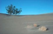 desert02
