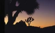 sunsets04