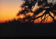 sunsets05